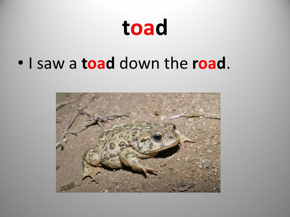toad I saw a toad down the road.