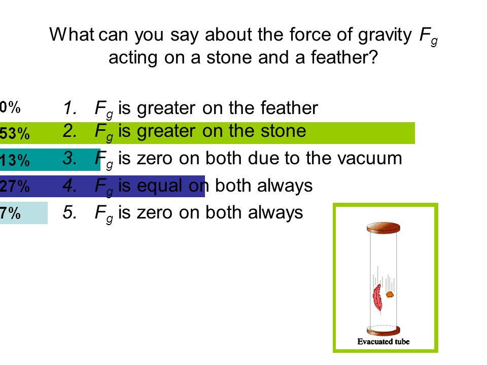 What can you say about the force of gravity F g acting on a stone and a feather.