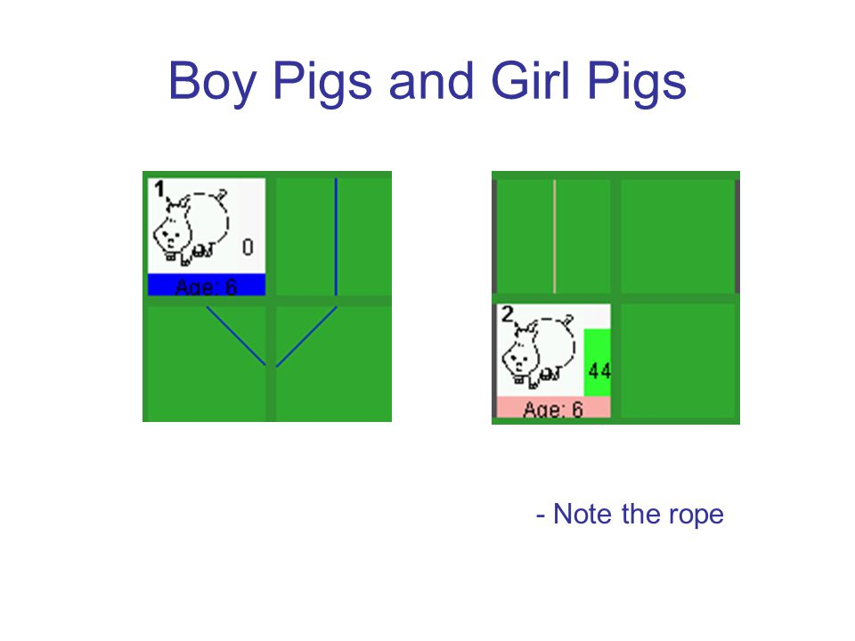 Boy Pigs and Girl Pigs - Note the rope