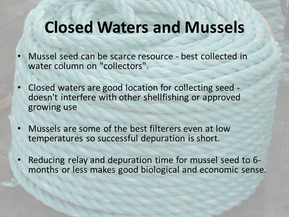 Closed Waters and Mussels Mussel seed can be scarce resource - best collected in water column on