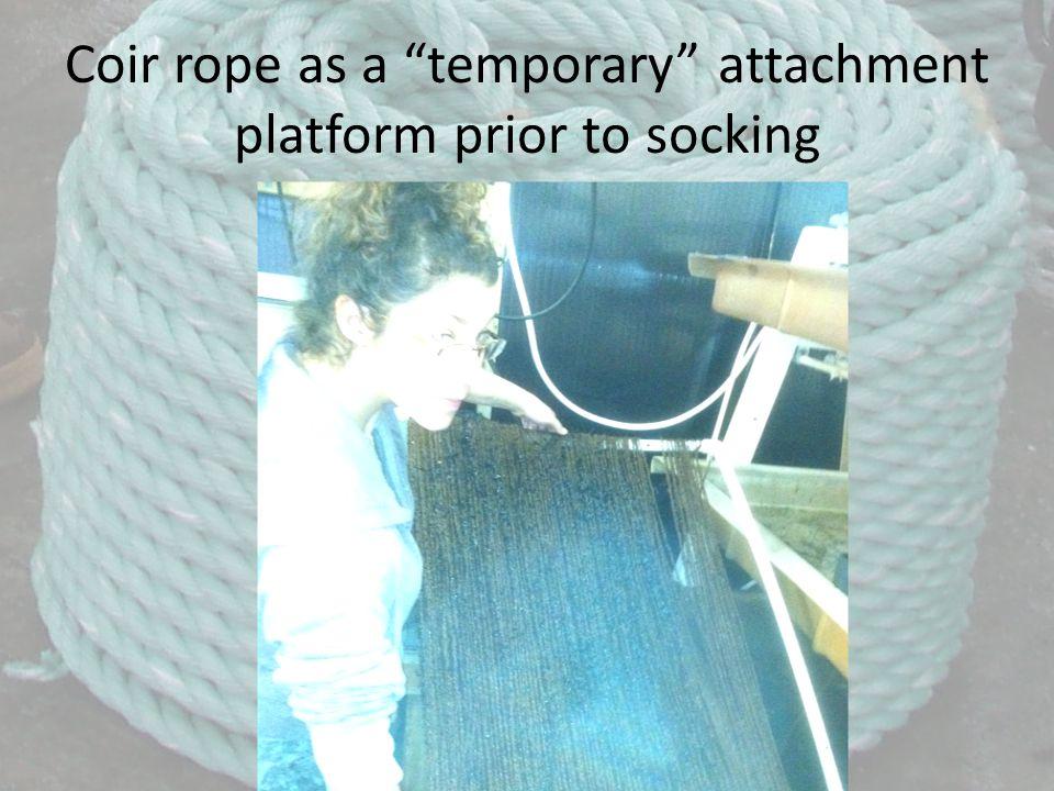 Coir rope as a temporary attachment platform prior to socking