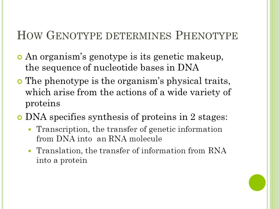 H OW G ENOTYPE DETERMINES P HENOTYPE An organism's genotype is its genetic makeup, the sequence of nucleotide bases in DNA The phenotype is the organism's physical traits, which arise from the actions of a wide variety of proteins DNA specifies synthesis of proteins in 2 stages: Transcription, the transfer of genetic information from DNA into an RNA molecule Translation, the transfer of information from RNA into a protein