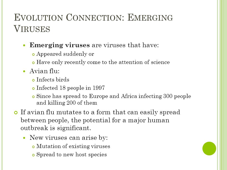 E VOLUTION C ONNECTION : E MERGING V IRUSES Emerging viruses are viruses that have: Appeared suddenly or Have only recently come to the attention of science Avian flu: Infects birds Infected 18 people in 1997 Since has spread to Europe and Africa infecting 300 people and killing 200 of them If avian flu mutates to a form that can easily spread between people, the potential for a major human outbreak is significant.