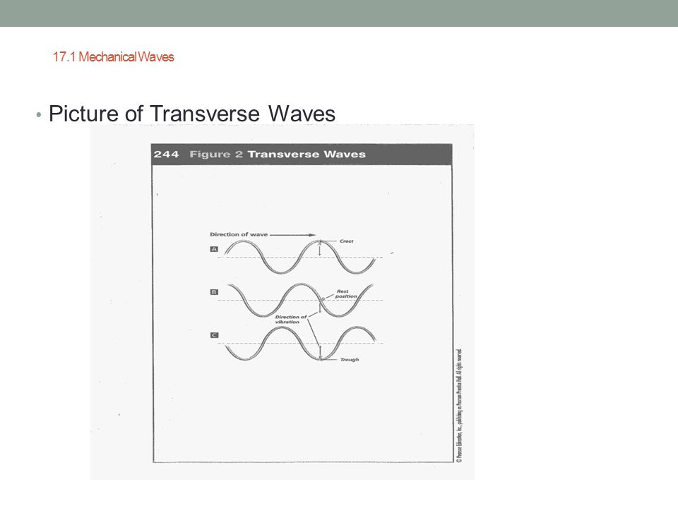 17.1 Mechanical Waves Picture of Transverse Waves