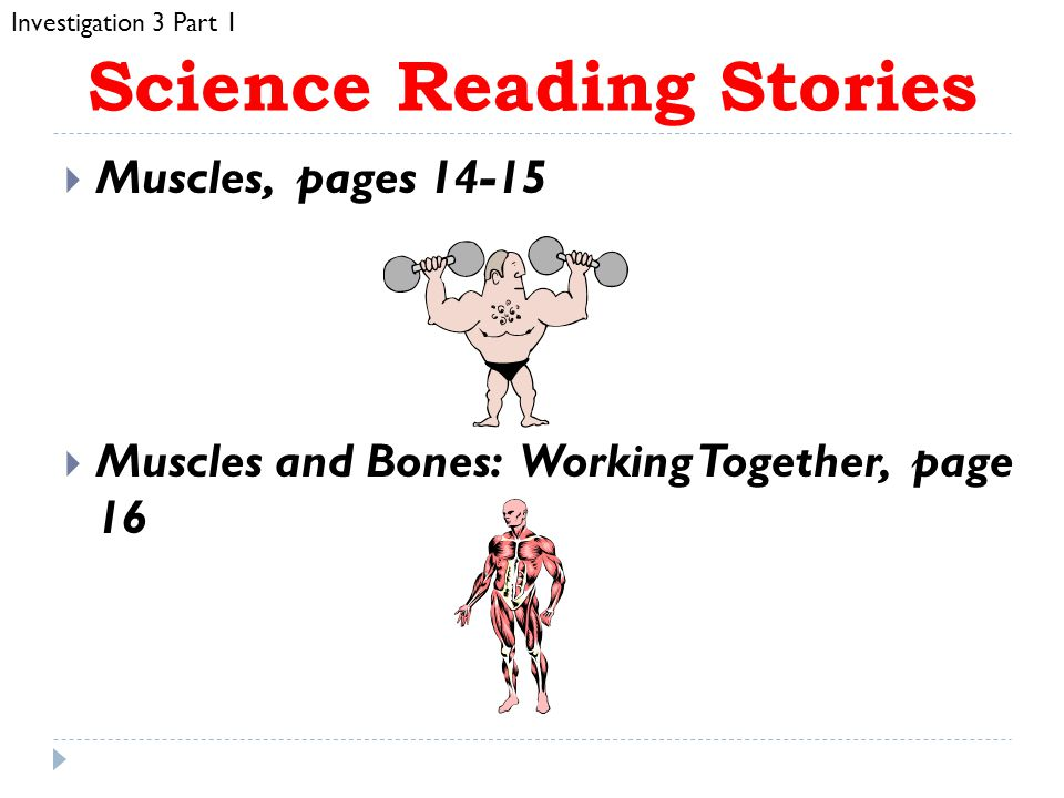 Content/Inquiry  Muscles contract (shorten) when they work  Muscles pull on bones when they contract, moving the bones  Muscles connect to bones with tissue called tendon Investigation 3 Part 1