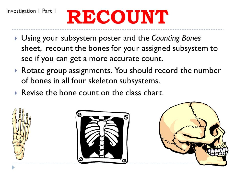 Skeleton  Skeleton Photograph  Functions of our skeleton: SUPPORT PROTECTION MOVEMENT Investigation 1 Part 1