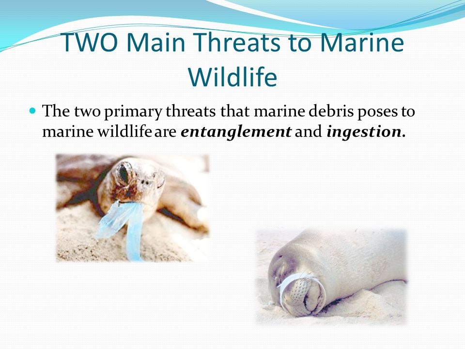TWO Main Threats to Marine Wildlife The two primary threats that marine debris poses to marine wildlife are entanglement and ingestion.