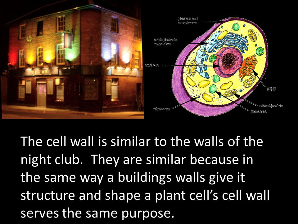 The Endoplasmic Reticulum or (ER) can be related to the hallways around the dance floor at the Club.