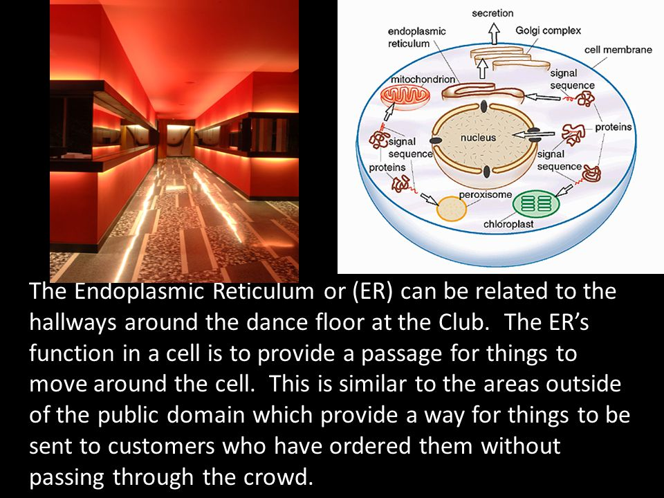 The Golgi apparatus is like the waiters that work in a club.