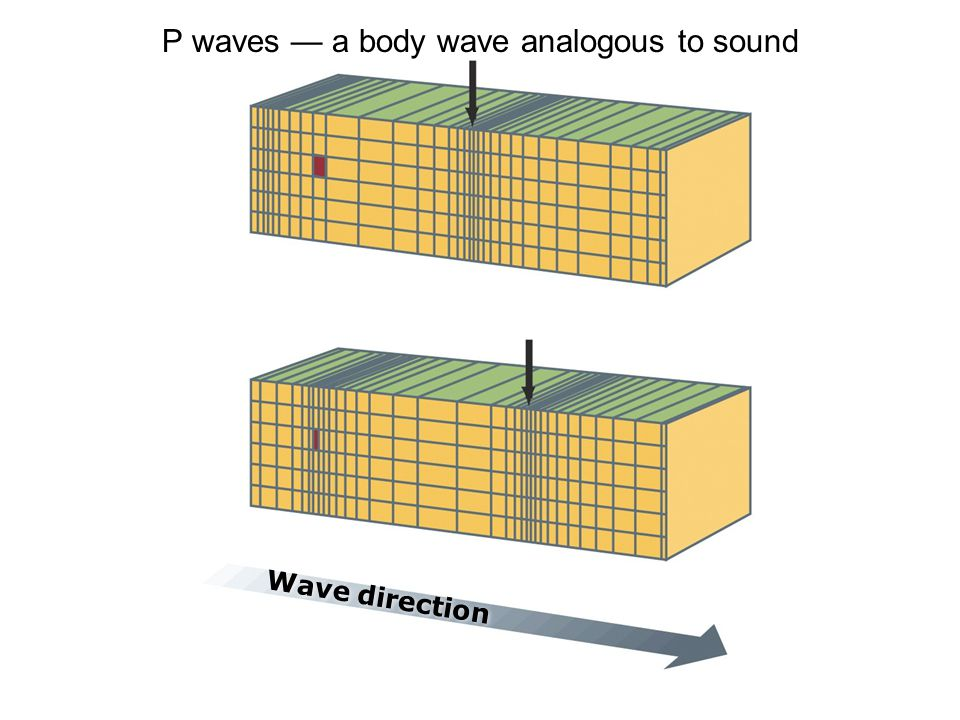 Wave direction P waves — a body wave analogous to sound