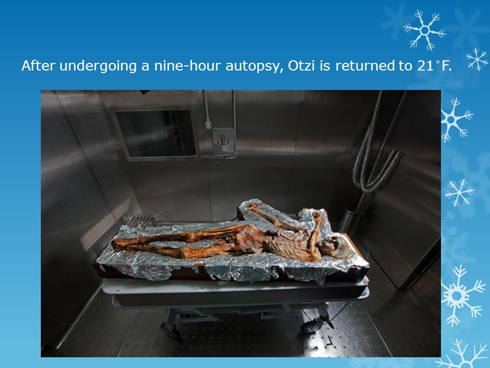 After undergoing a nine-hour autopsy, Otzi is returned to 21°F.