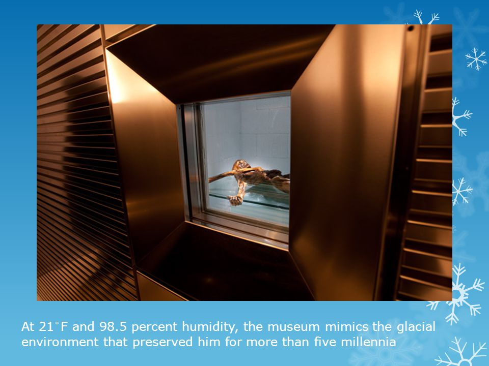 At 21°F and 98.5 percent humidity, the museum mimics the glacial environment that preserved him for more than five millennia