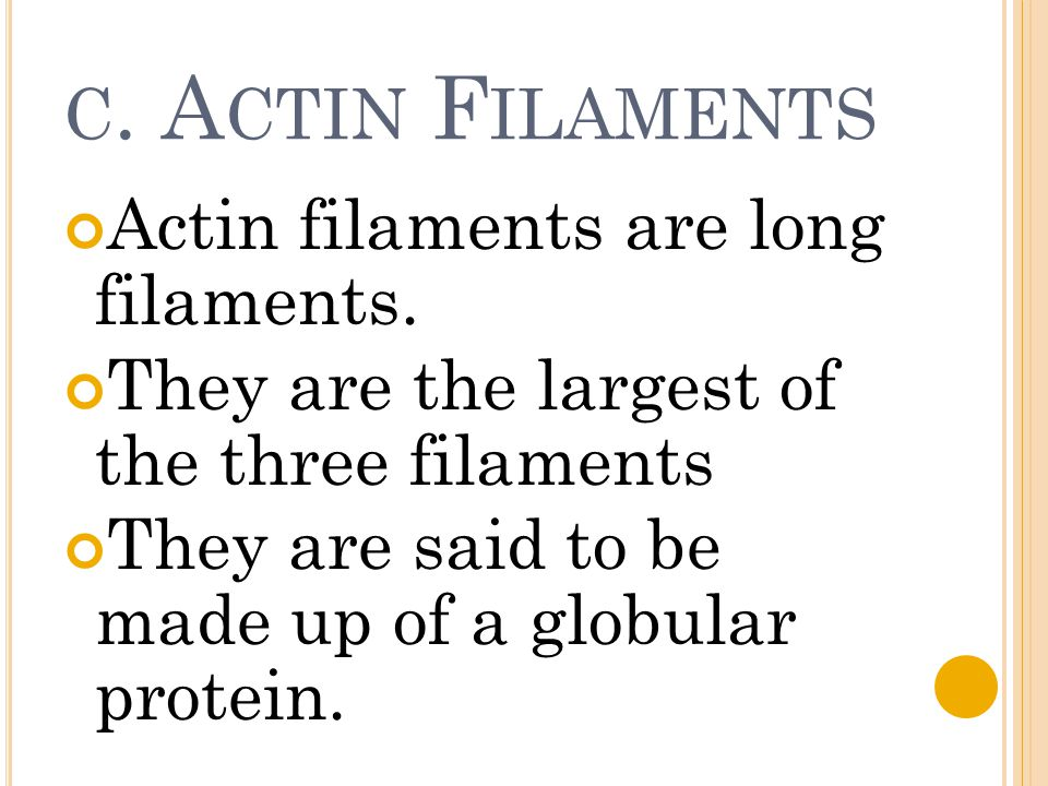 C. A CTIN F ILAMENTS Actin filaments are long filaments. They are the largest of the three filaments They are said to be made up of a globular protein