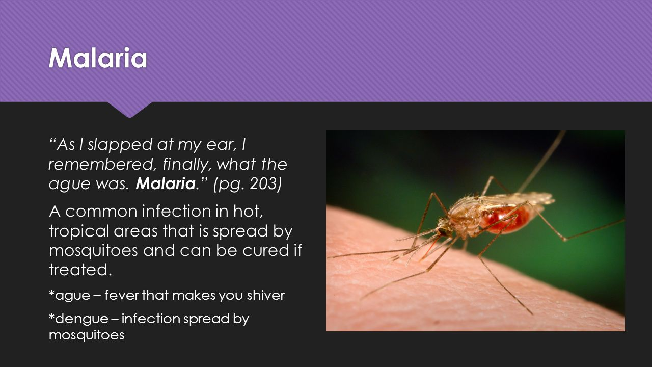 Malaria As I slapped at my ear, I remembered, finally, what the ague was.