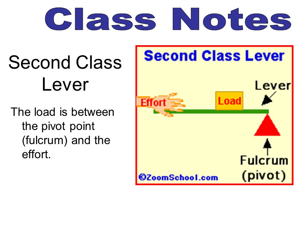 Second Class Lever The load is between the pivot point (fulcrum) and the effort.