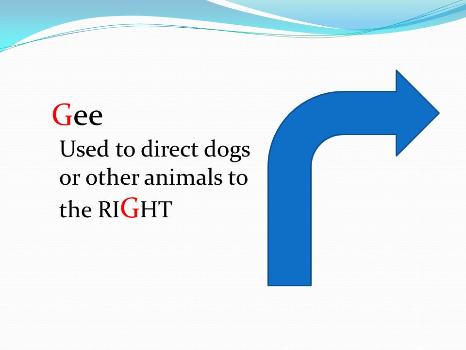 Gee Used to direct dogs or other animals to the RI G HT