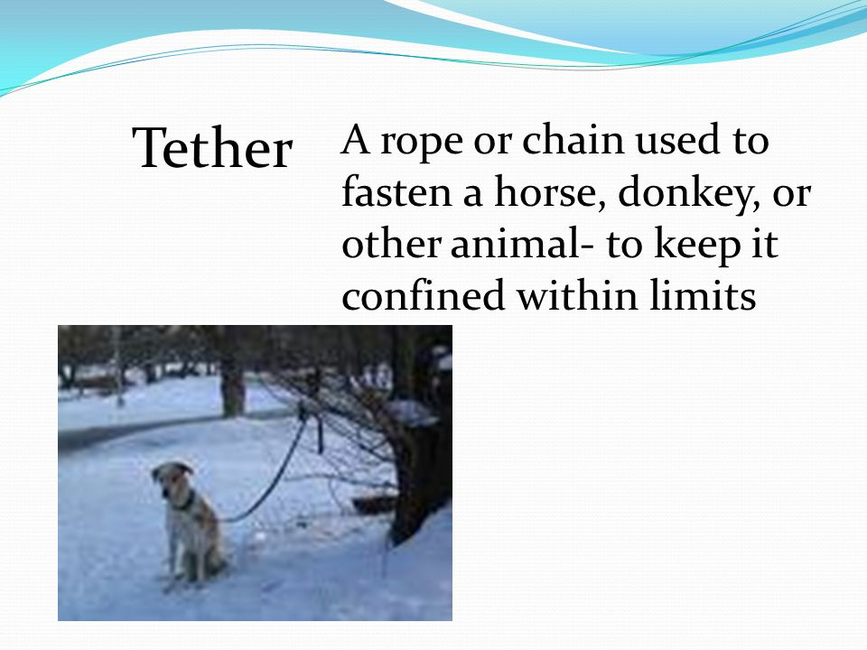 Tether A rope or chain used to fasten a horse, donkey, or other animal- to keep it confined within limits
