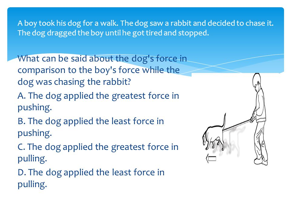 What can be said about the dog s force in comparison to the boy s force while the dog was chasing the rabbit.