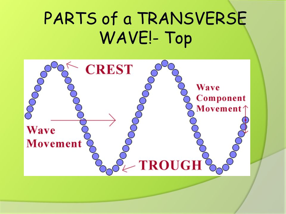 PARTS of a TRANSVERSE WAVE!- Top