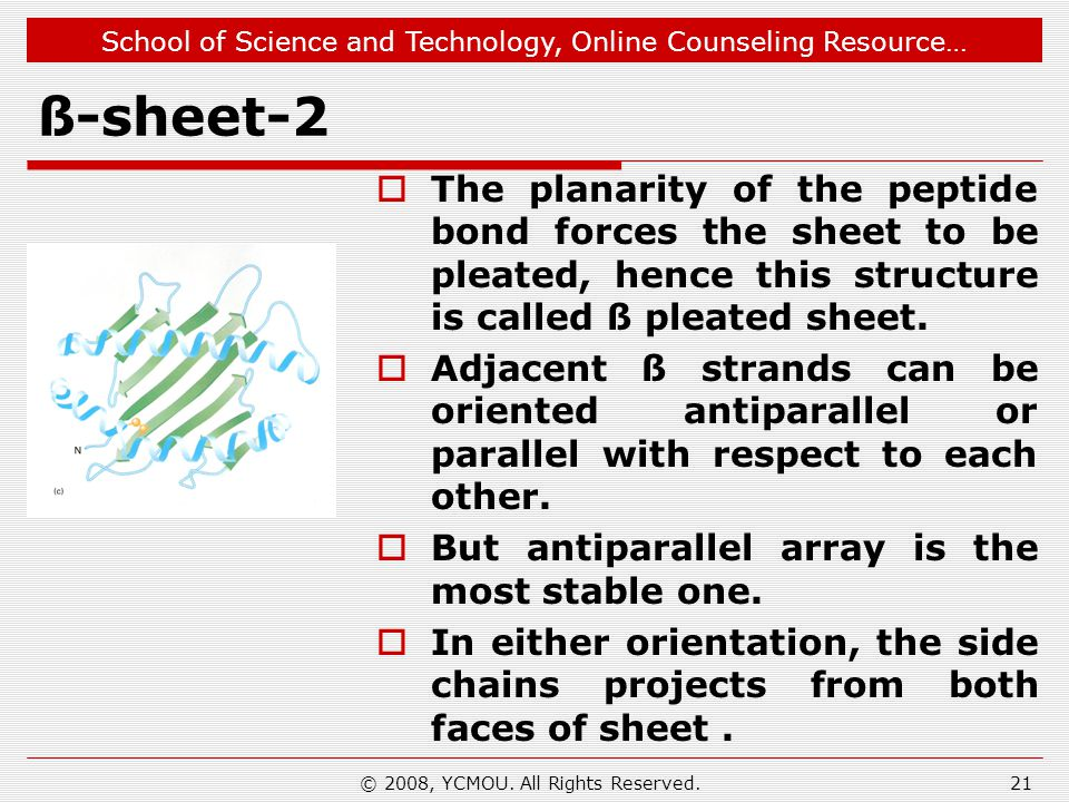 School of Science and Technology, Online Counseling Resource… ß-sheet-2  The planarity of the peptide bond forces the sheet to be pleated, hence this structure is called ß pleated sheet.