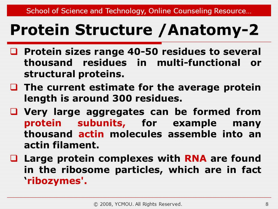 School of Science and Technology, Online Counseling Resource… Protein Structure /Anatomy-2  Protein sizes range 40-50 residues to several thousand residues in multi-functional or structural proteins.