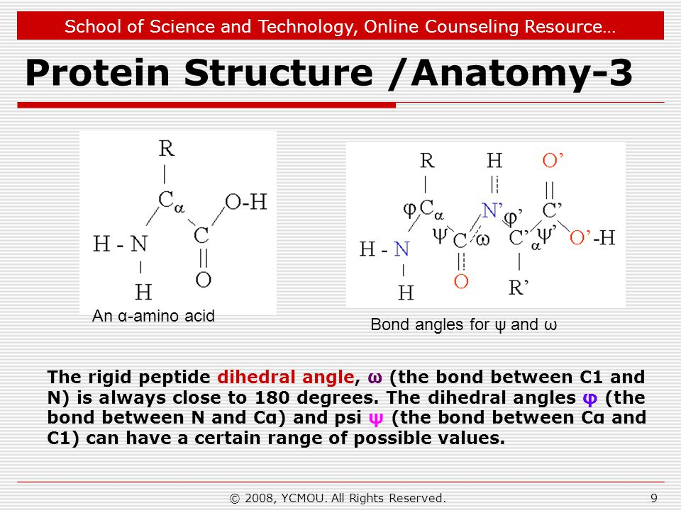School of Science and Technology, Online Counseling Resource… Protein Structure /Anatomy-3 Bond angles for ψ and ω An α-amino acid The rigid peptide dihedral angle, ω (the bond between C1 and N) is always close to 180 degrees.