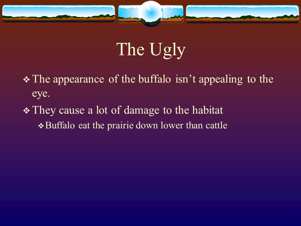 The Bad  Buffalo nearly became extinct  In the late 1800's there were less than 100,000  Many ranchers were unable to graze their cattle  The Buffalo would travel 100 miles a week grazing  Many Buffalo were needlessly slaughtered for their hides and the delicacy of certain parts.
