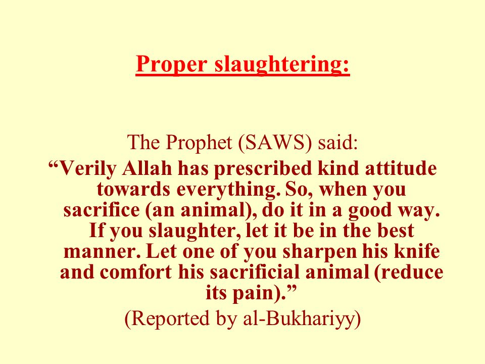 "Proper slaughtering: The Prophet (SAWS) said: ""Verily Allah has prescribed kind attitude towards everything. So, when you sacrifice (an animal), do it"