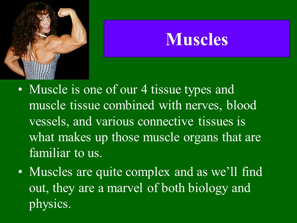 Muscles Muscle is one of our 4 tissue types and muscle tissue combined with nerves, blood vessels, and various connective tissues is what makes up tho
