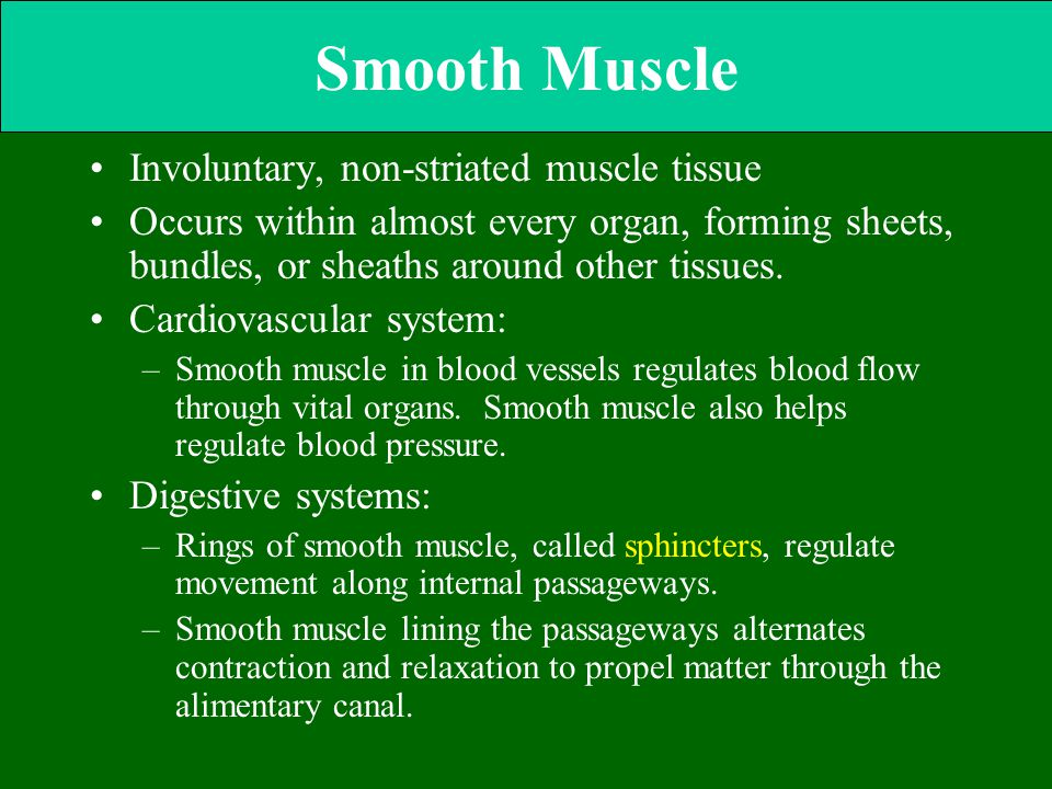 Smooth Muscle Involuntary, non-striated muscle tissue Occurs within almost every organ, forming sheets, bundles, or sheaths around other tissues. Card