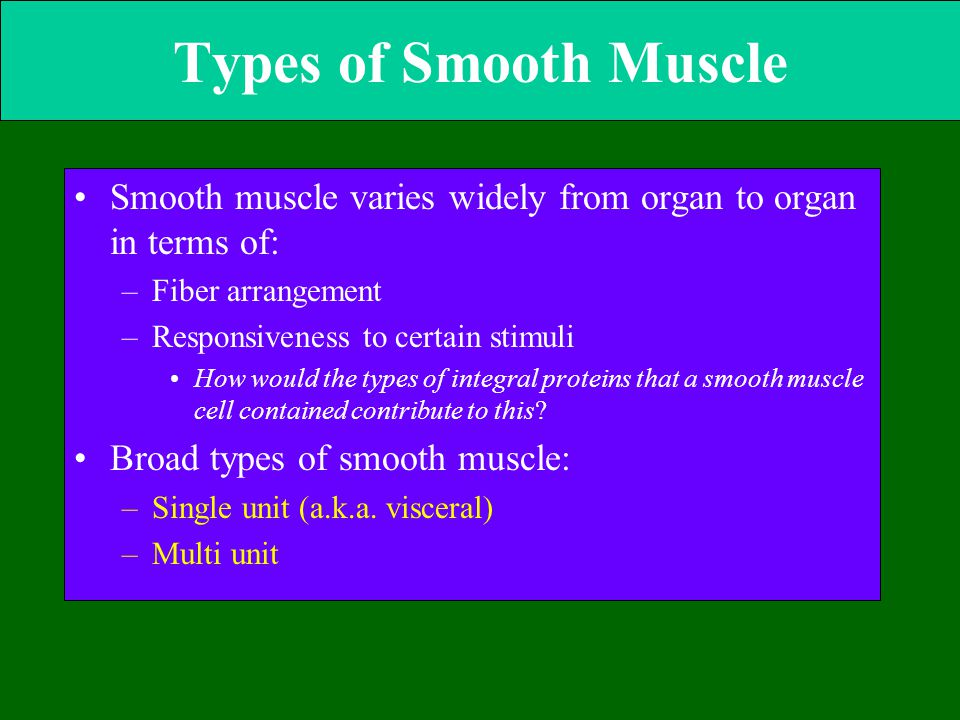 Types of Smooth Muscle Smooth muscle varies widely from organ to organ in terms of: –Fiber arrangement –Responsiveness to certain stimuli How would th