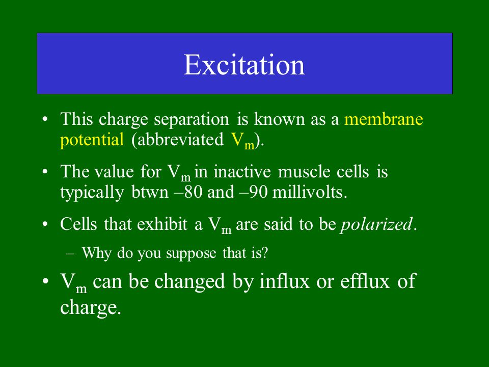 Excitation This charge separation is known as a membrane potential (abbreviated V m ). The value for V m in inactive muscle cells is typically btwn –8