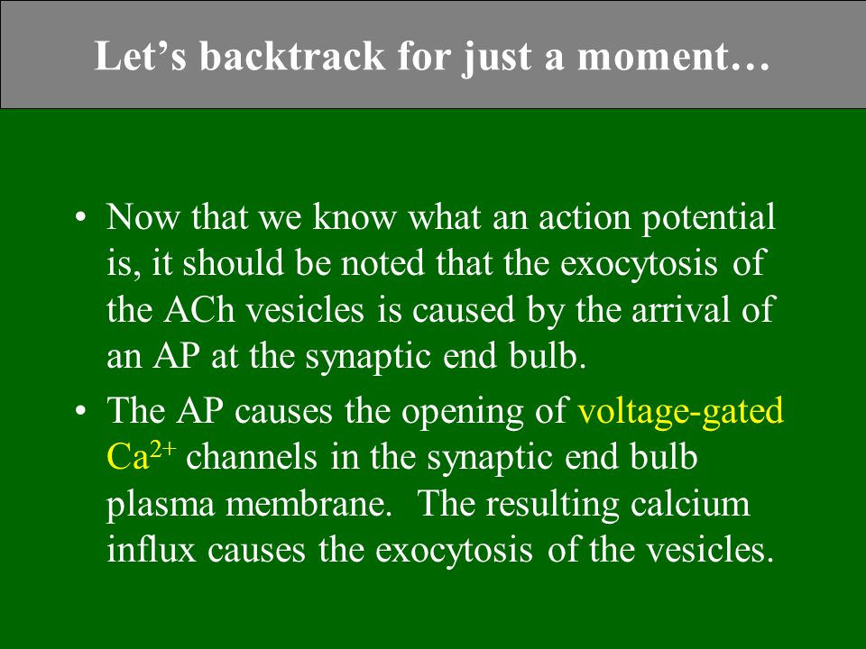 Let's backtrack for just a moment… Now that we know what an action potential is, it should be noted that the exocytosis of the ACh vesicles is caused