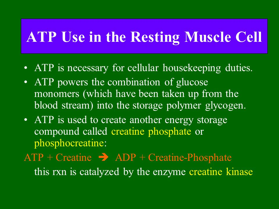 ATP Use in the Resting Muscle Cell ATP is necessary for cellular housekeeping duties. ATP powers the combination of glucose monomers (which have been
