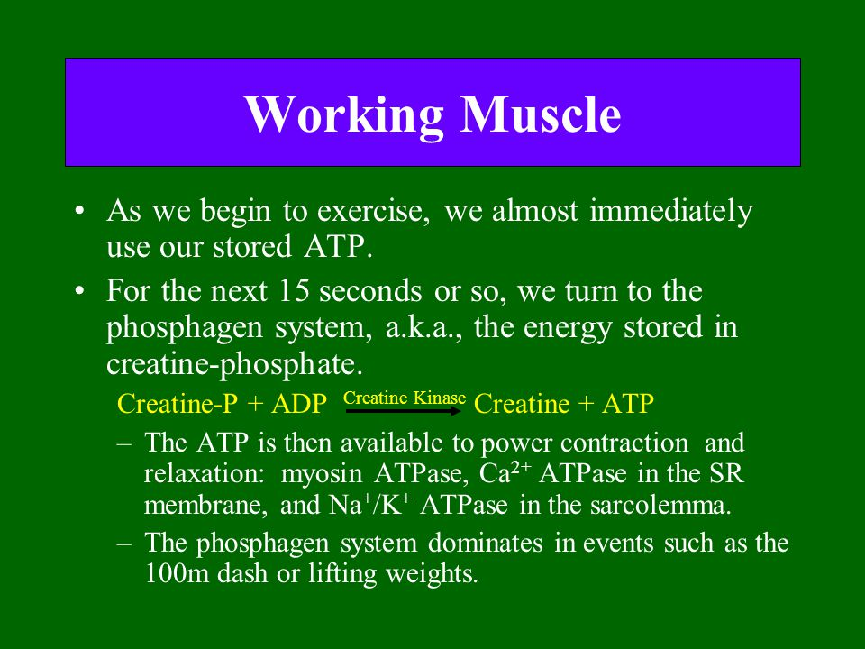 Working Muscle As we begin to exercise, we almost immediately use our stored ATP. For the next 15 seconds or so, we turn to the phosphagen system, a.k