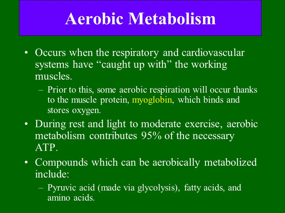 """Aerobic Metabolism Occurs when the respiratory and cardiovascular systems have """"caught up with"""" the working muscles. –Prior to this, some aerobic resp"""