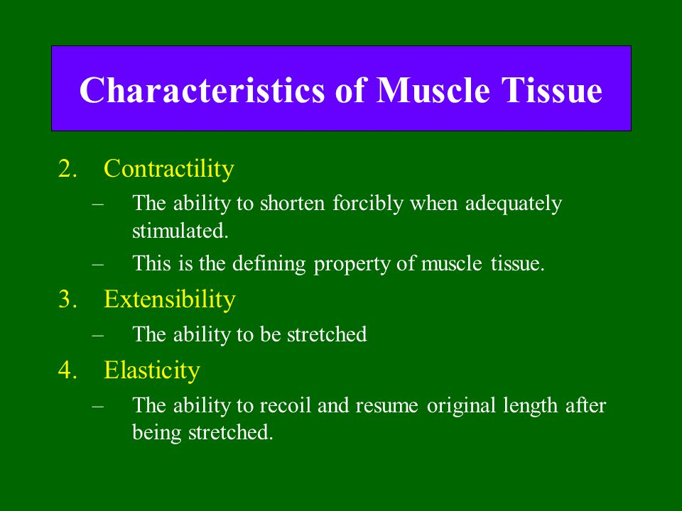 Characteristics of Muscle Tissue 2.Contractility –The ability to shorten forcibly when adequately stimulated. –This is the defining property of muscle