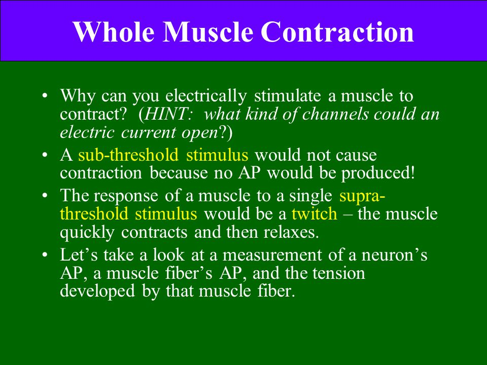 Whole Muscle Contraction Why can you electrically stimulate a muscle to contract? (HINT: what kind of channels could an electric current open?) A sub-