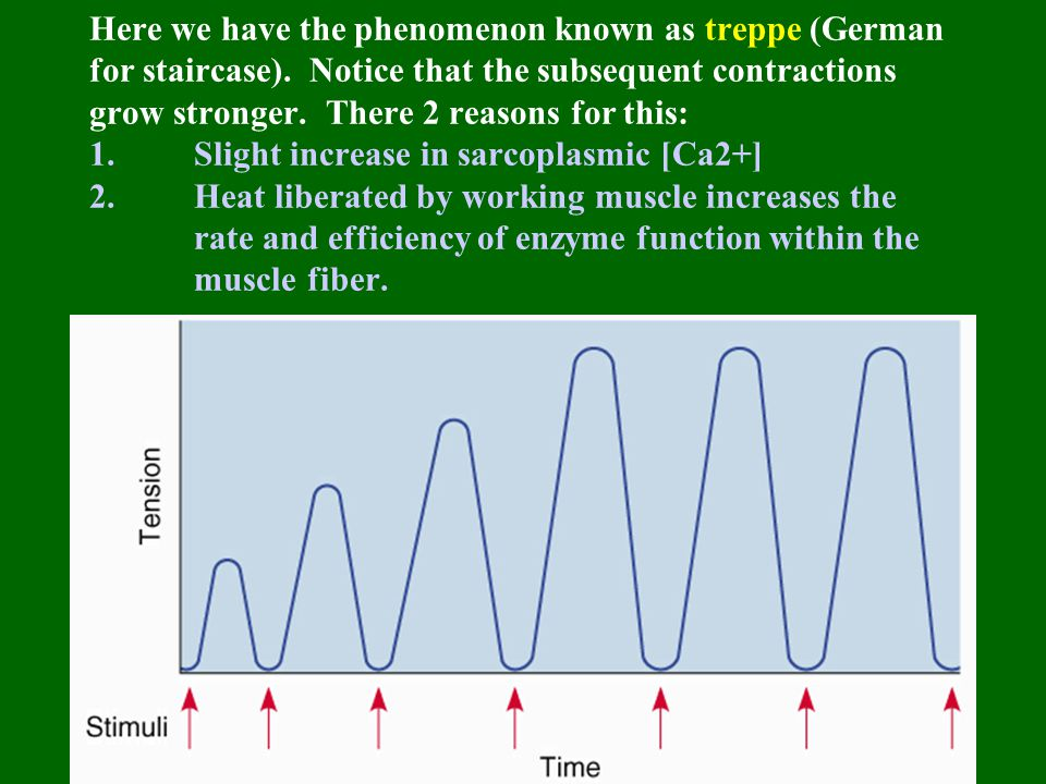 Here we have the phenomenon known as treppe (German for staircase). Notice that the subsequent contractions grow stronger. There 2 reasons for this: 1