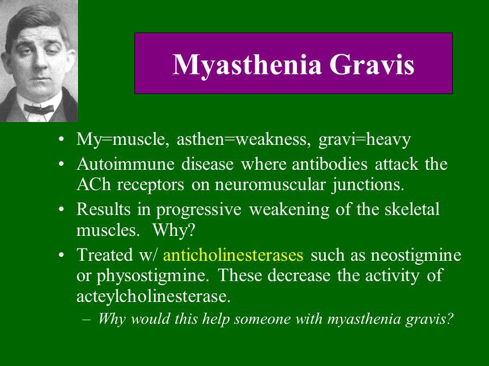 Myasthenia Gravis My=muscle, asthen=weakness, gravi=heavy Autoimmune disease where antibodies attack the ACh receptors on neuromuscular junctions. Res
