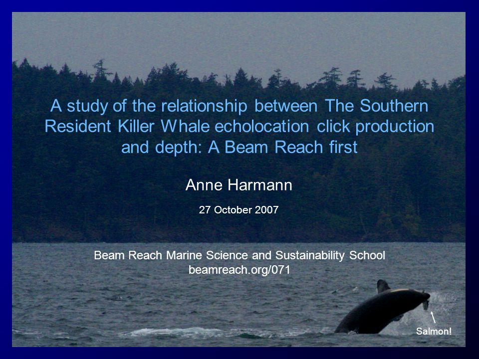 A study of the relationship between The Southern Resident Killer Whale echolocation click production and depth: A Beam Reach first Anne Harmann 27 October 2007 Beam Reach Marine Science and Sustainability School beamreach.org/071 Salmon!