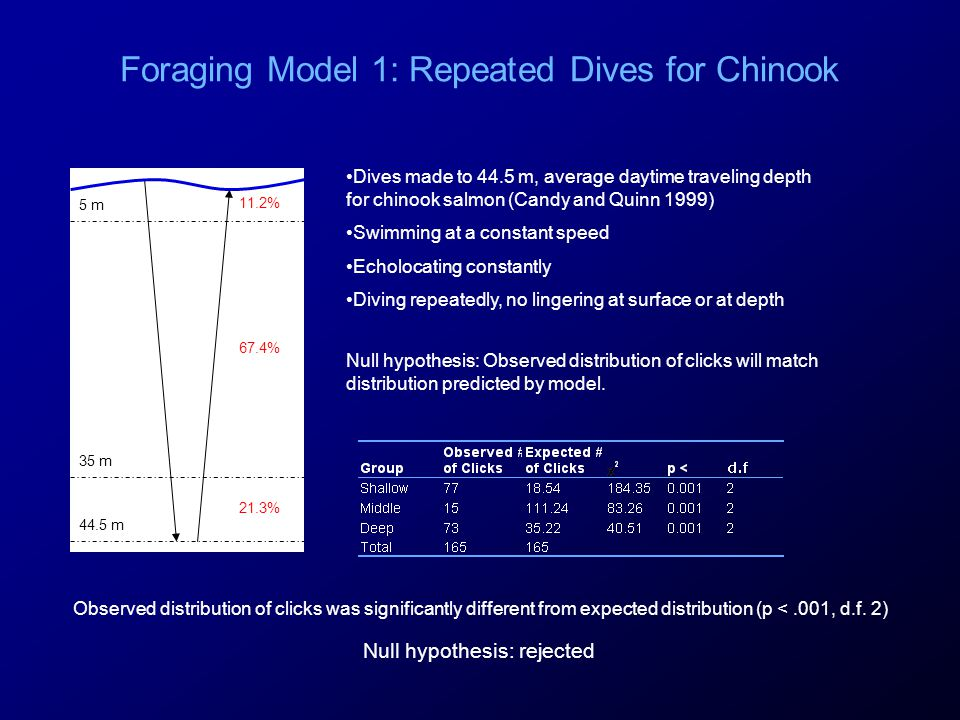 Foraging Model 1: Repeated Dives for Chinook 5 m 35 m 44.5 m 67.4% 11.2% 21.3% Null hypothesis: Observed distribution of clicks will match distributio
