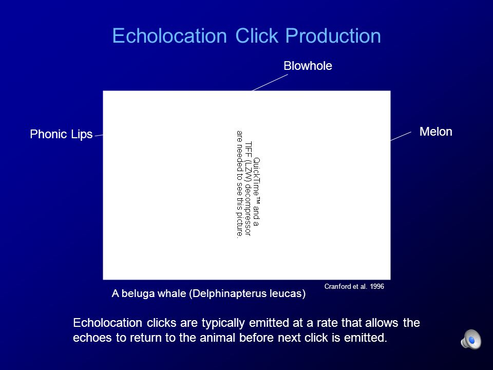 Echolocation Click Production Cranford et al.