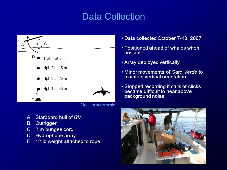 Data Collection A B C D E Hph 1 at 5 m Hph 2 at 15 m Hph 3 at 25 m Hph 4 at 35 m Data collected October 7-13, 2007 Positioned ahead of whales when possible Array deployed vertically Minor movements of Gato Verde to maintain vertical orientation Stopped recording if calls or clicks became difficult to hear above background noise A.Starboard hull of GV B.Outrigger C.2 m bungee cord D.Hydrophone array E.12 lb weight attached to rope Diagram not to scale