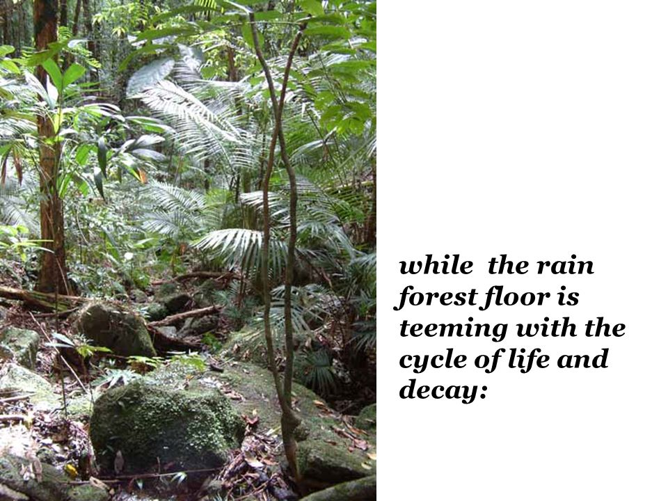 while the rain forest floor is teeming with the cycle of life and decay: