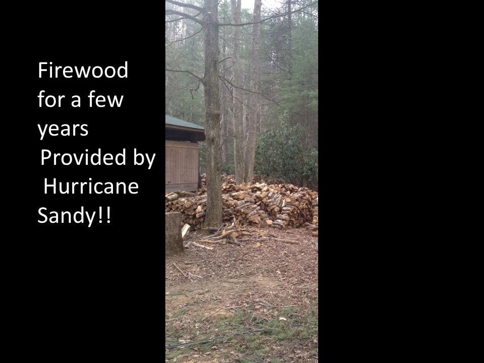 Firewood for a few years Provided by Hurricane Sandy!!