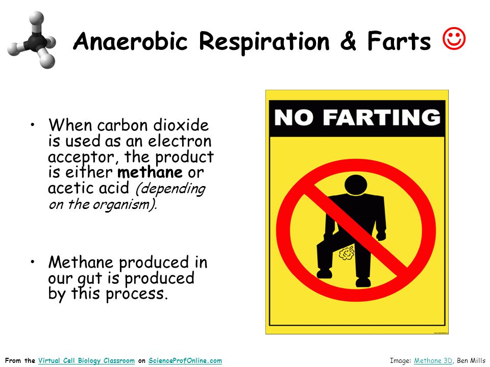 Anaerobic Respiration & Farts When carbon dioxide is used as an electron acceptor, the product is either methane or acetic acid (depending on the organism).
