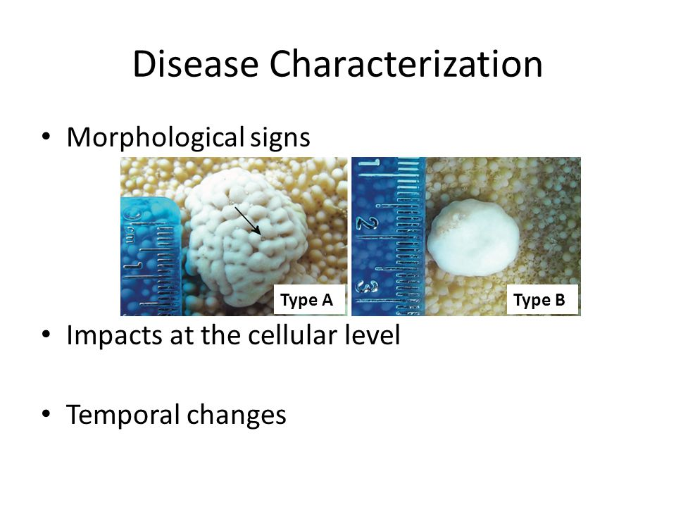 Disease Characterization Morphological signs Impacts at the cellular level Temporal changes Type AType B