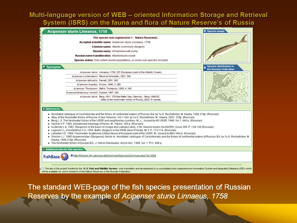 Multi-language version of WEB – oriented Information Storage and Retrieval System (ISRS) on the fauna and flora of Nature Reserve's of Russia The standard WEB-page of the fish species presentation of Russian Reserves by the example of Acipenser sturio Linnaeus, 1758