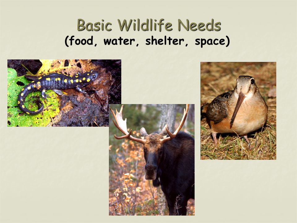 Basic Wildlife Needs (food, water, shelter, space)